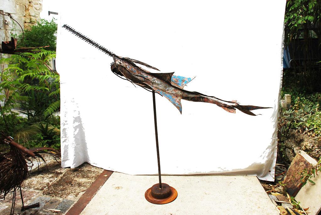 requin scie dans la cour