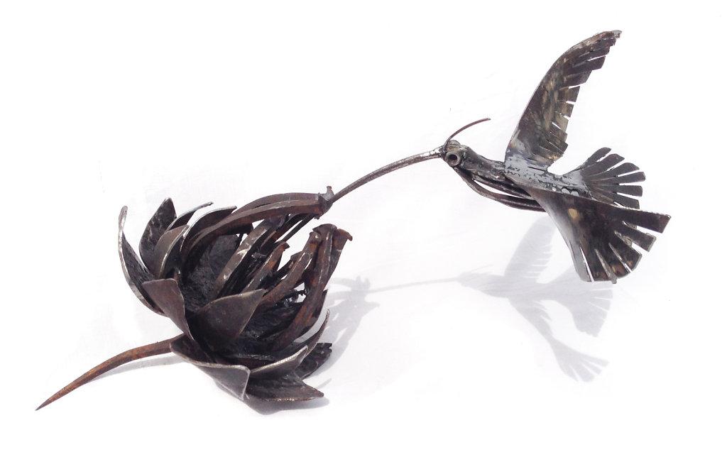 Cinara et colibri