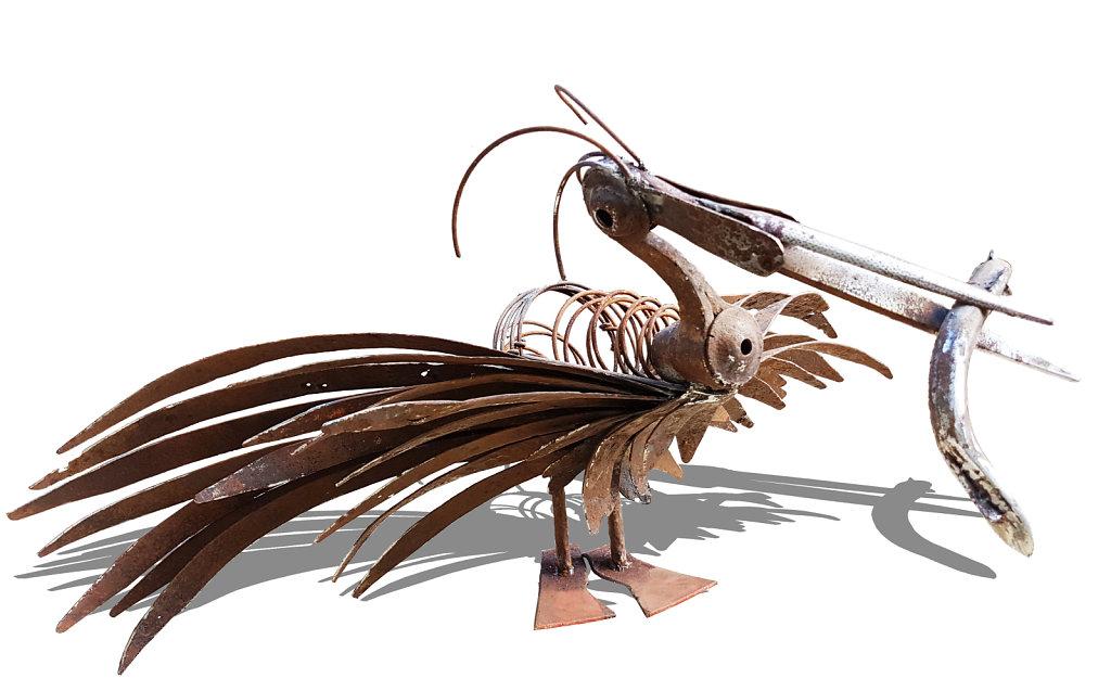 Pelican et Anguille